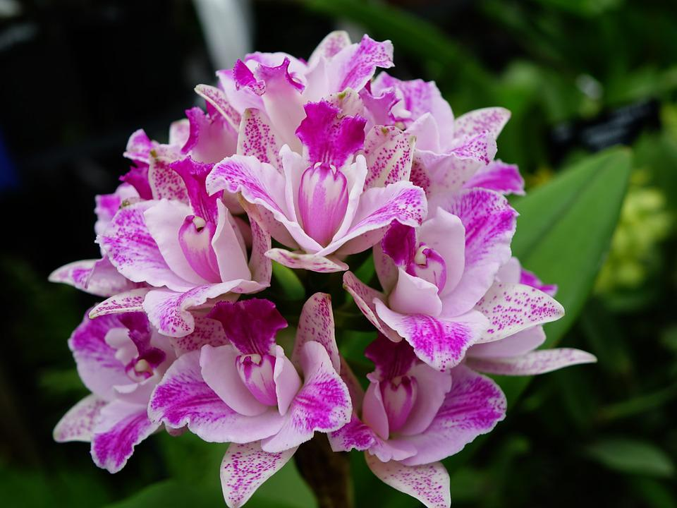 free photo orchids, flower, floral, bloom  free image on pixabay, Beautiful flower