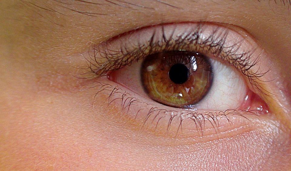 Eye Human The Anatomy Of A Free Photo On Pixabay