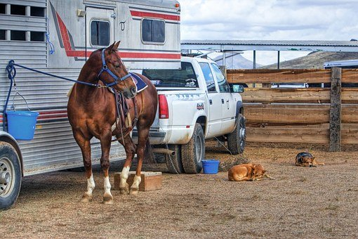 Horse, Dog, Animal, Truck, Western