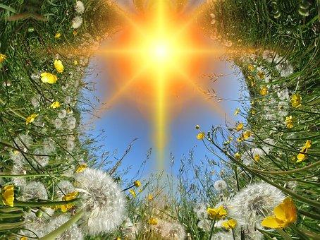 Dandelions, Dandelion, Meadow, Sun