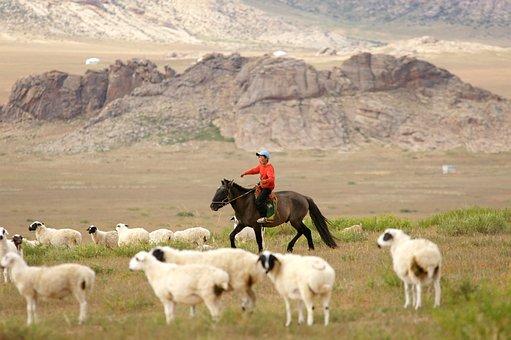 Mongolia, Caballo, Jinete, Niño