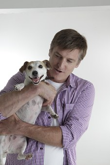 Jack Russell, Pet, Dog, Terrier, Canine