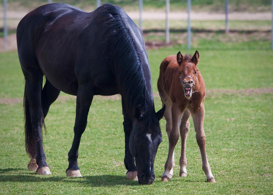 Free Photo Foal Mare Colt Equine Horse Free Image