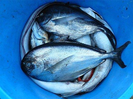الأسماك، الأطعمة البحرية، الفضة، التباين، إغلاق