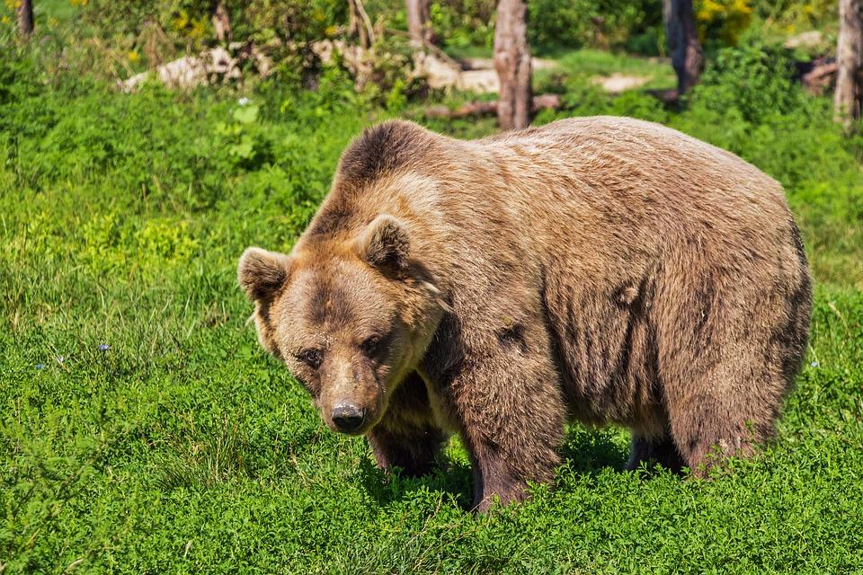 Фото медведя