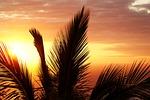 palm, sunset