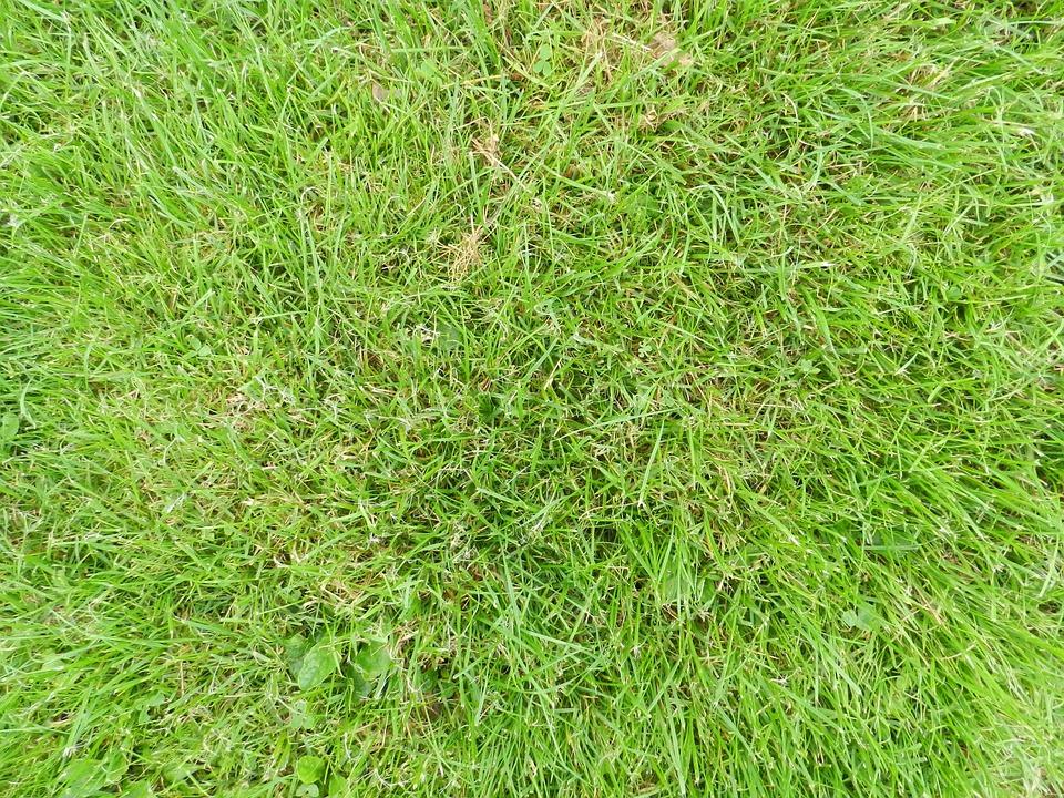 Foto gratis hierba suelo tierra imagen gratis en - Suelo hierba artificial ...