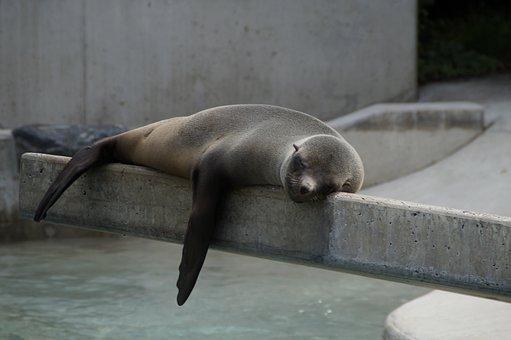 Robbe, Lazing Around, Lazy, Rest