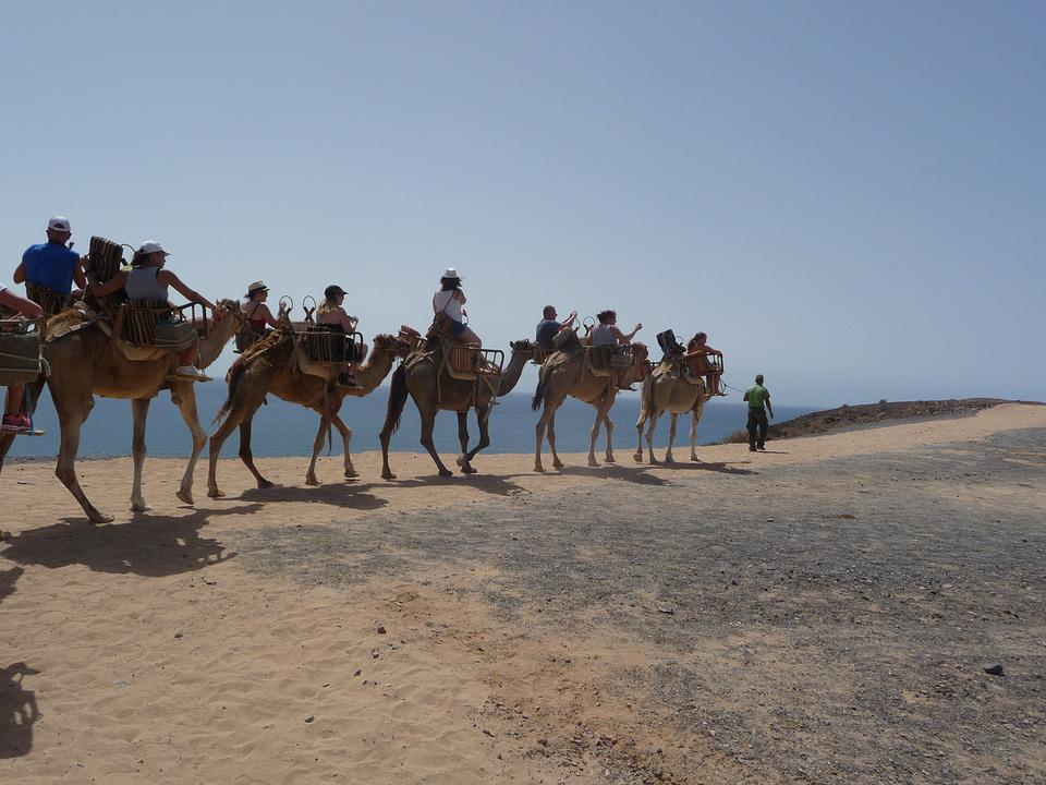 Caravan, Camel, Desert Ship, Ride, Transport