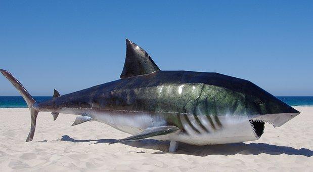 Shark images pixabay download free pictures shark fish model sculpture art metal steel altavistaventures Images