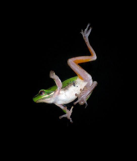 free photo tree frog jump falling motion free image