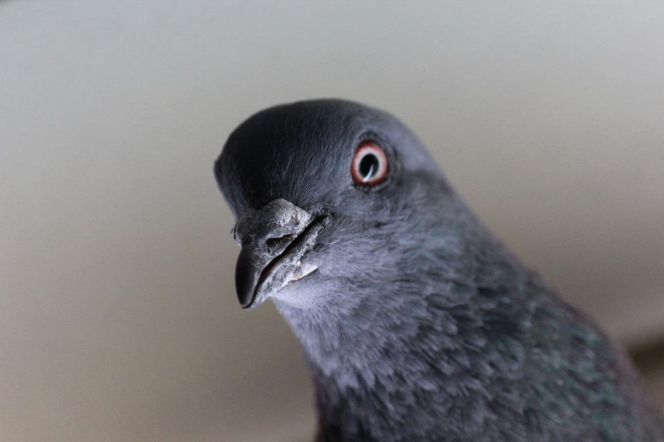 Tips on how to keep pigeons away from your patio
