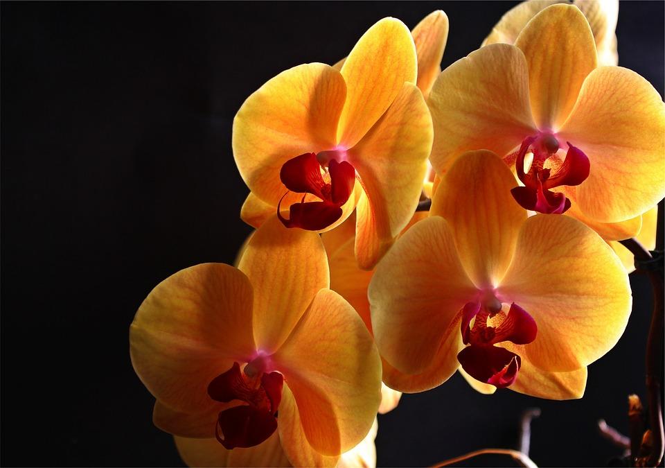 kostenloses foto orchidee bl ten pflanze gelb kostenloses bild auf pixabay 426065. Black Bedroom Furniture Sets. Home Design Ideas