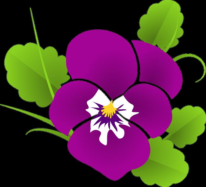 Fiołek Ogrodowy, Fioletowy, Altówka, Fiołkowate, Kwiat