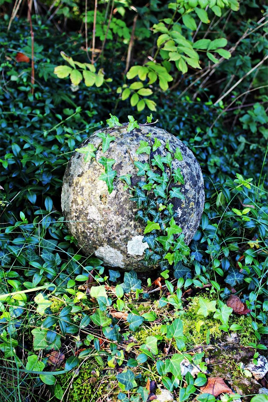плющ на камнях картинки человечества