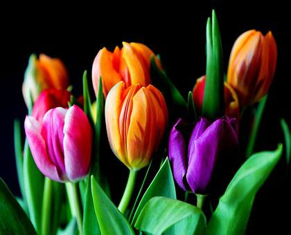 Цветы, Тюльпаны, Букет, Срезанные Цветы