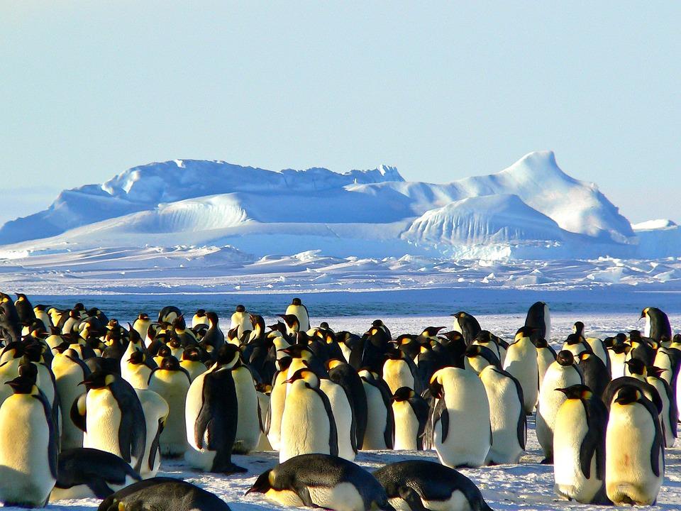Emperor Penguins, Antarctic, Life, Animal, Ice