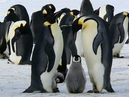 Animal life in the antarctic ocean