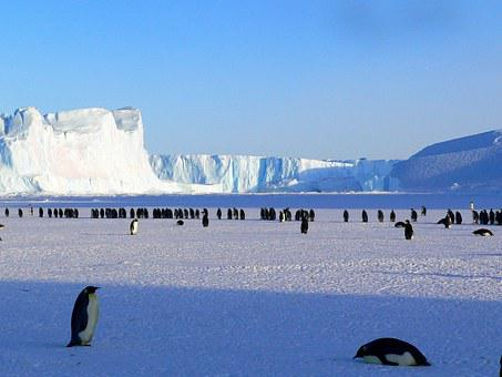 Penguins, Emperor, Antarctic, Life