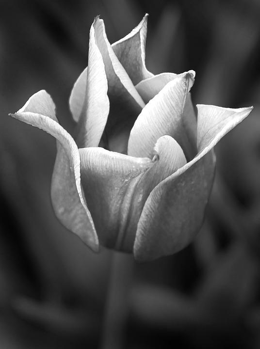 Blomma svart vit