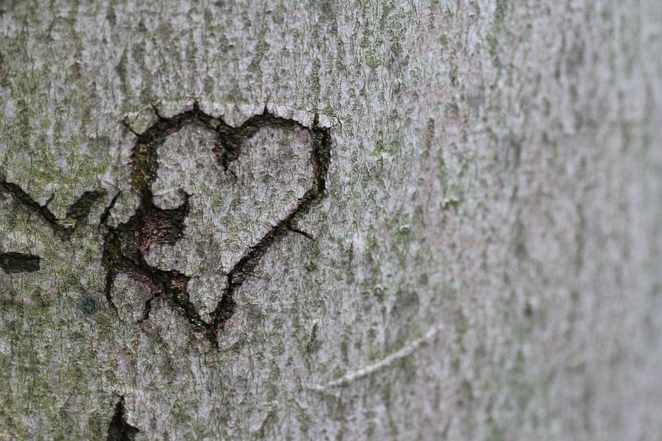 心, 愛の宣言, 愛, 木, ロマンス, 彫刻, 樹皮, シンボル, ロマンチックな, バレンタインデー