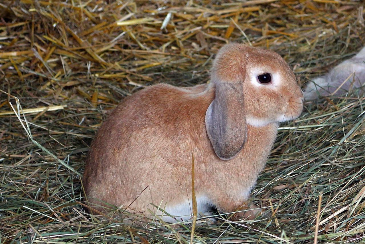 египте пришлось грызуны зайцы кролики фото описание так норовит
