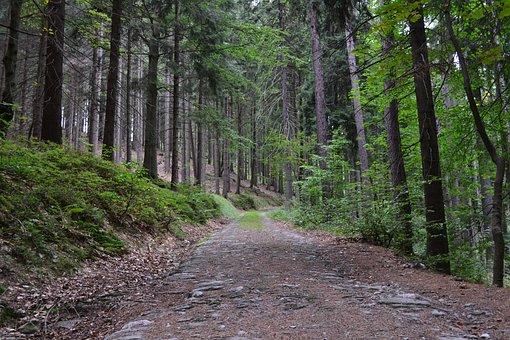 Trees, Forest, Path, Stony, Stones