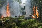 pożar lasu, ogień, dym