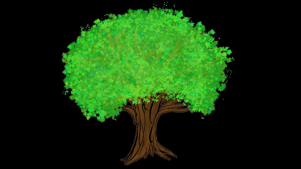 Gambar Pohon Png Rumah Zul