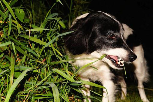 Dog, Pet, Garden, At Night, Grass, Eat