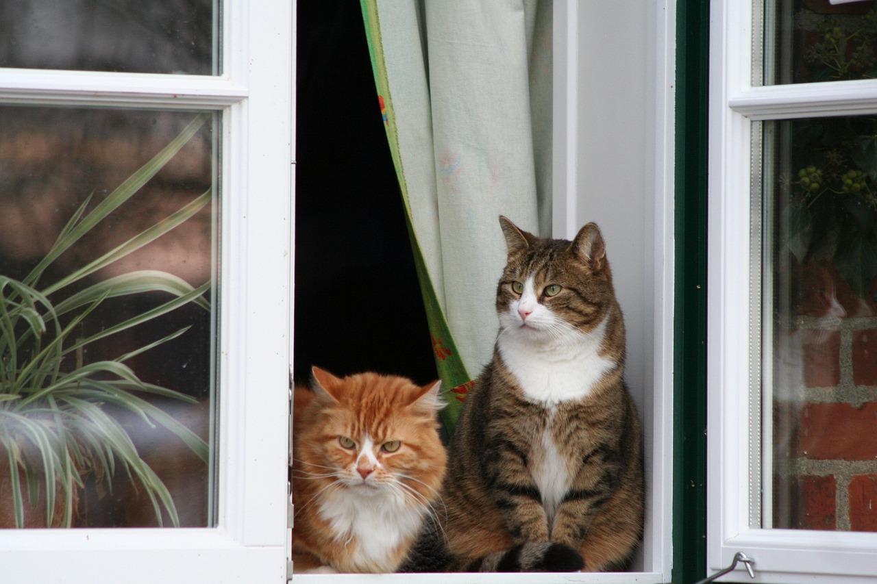 Картинки кошек в окне
