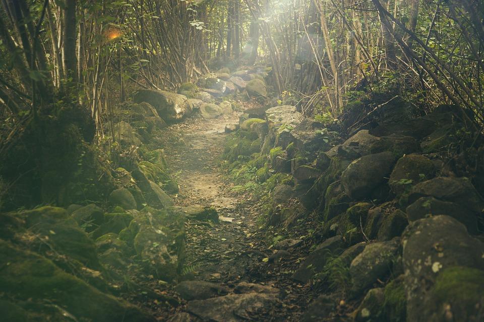 Wald, Pfad, Mystische, Felsen, Märchen, Sonnenlicht