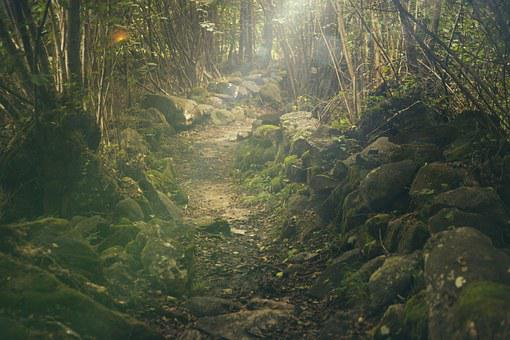 Forest, Path, Mystical, Rocks, Fairytale