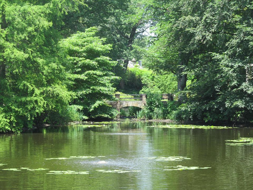 free photo pond summer green peaceful free image on
