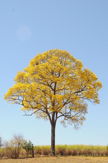 Foto gratis rbol amarillo primavera granja imagen for Arboles para cierre de jardin