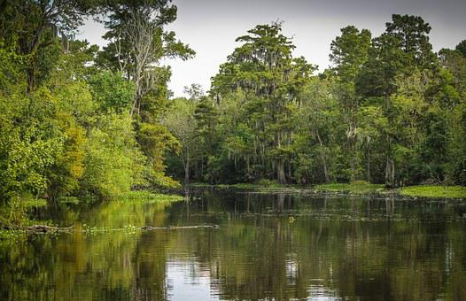 Bayou, Swamp, Marsh, Wetland, Louisiana