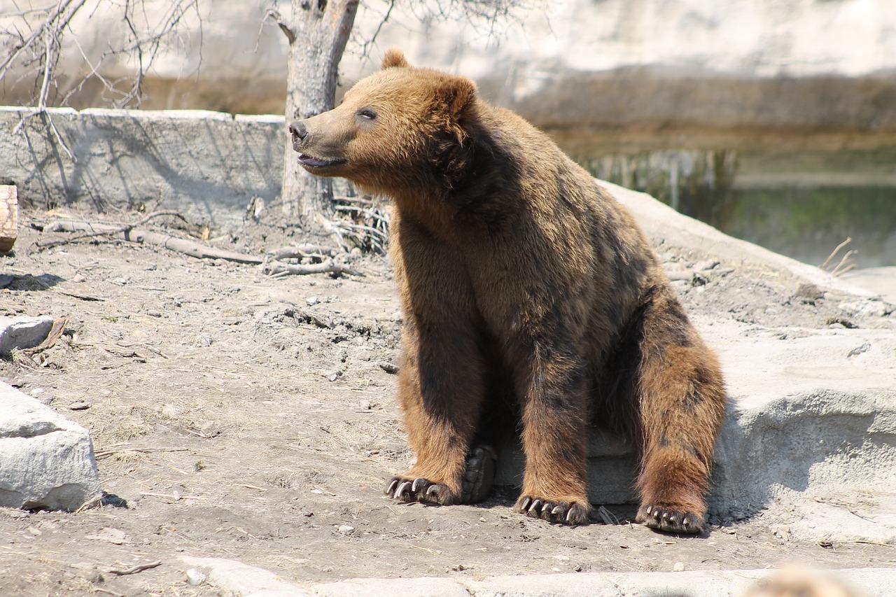 лучших члан медведя фото болезней вредителей