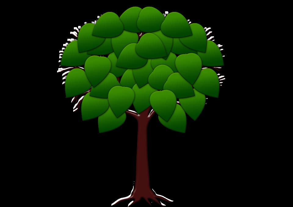 Baum Struktur Blätter Kostenloses Bild Auf Pixabay