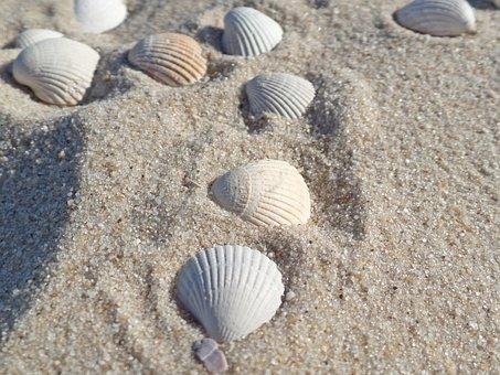 Muschel, Sylt, Strand, Nordsee, Meer