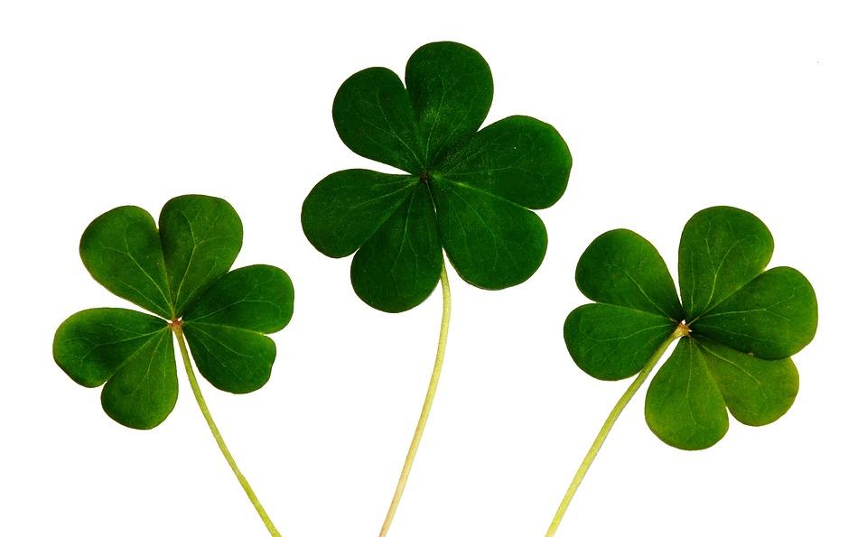 Trifoglio, Quadrifogli, Irlandese, Giorno, Fortuna