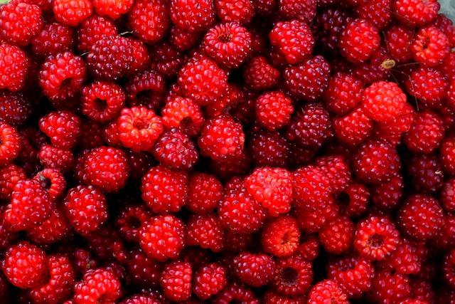 Raspberry Red Berry Free Photo On Pixabay