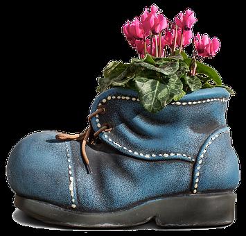 Alpenveilchen, Blume, Rosa, Natur, Blüte