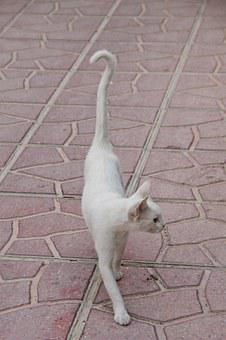 Cat, White, Animal, Pride, Thin, Fur