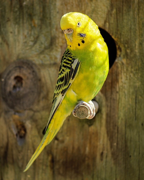 Parrots: Are They Good As Pets!