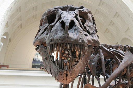 Tyrannosaurus Rex, Préhistorique
