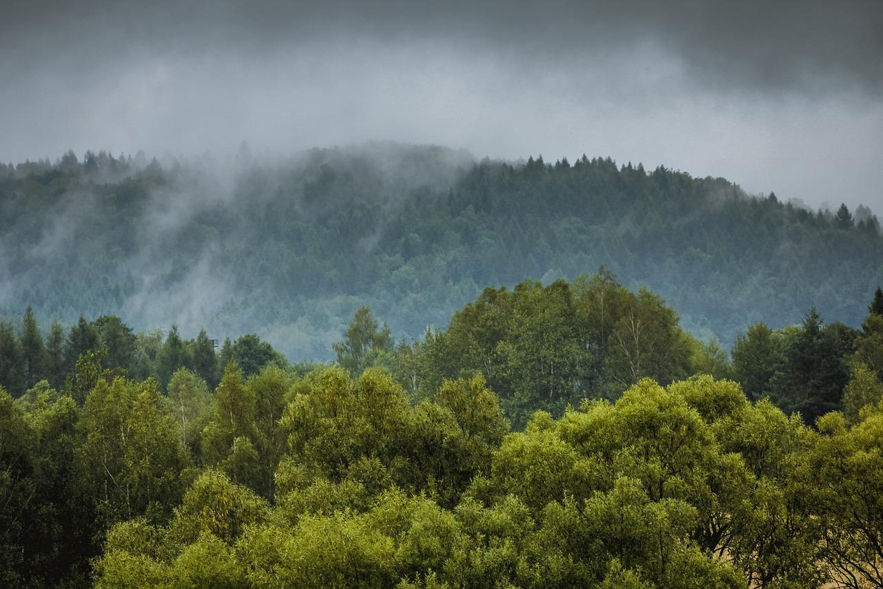 осталась фото дождливого леса приятным
