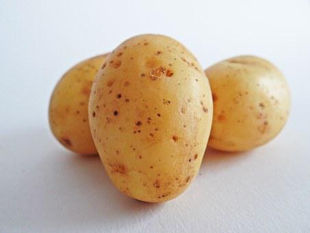 Potatoes Images · Pixabay · Download Free Pictures on gold eggnog, gold watermelon, gold zucchini squash, gold macarons, gold potato recipes, gold popcorn, gold clam, gold beans, gold milk, gold jerky, gold turnip, gold onion, gold water, gold leaf lettuce, gold wine, gold beets, gold beer, gold sugar, gold dessert, gold stock,