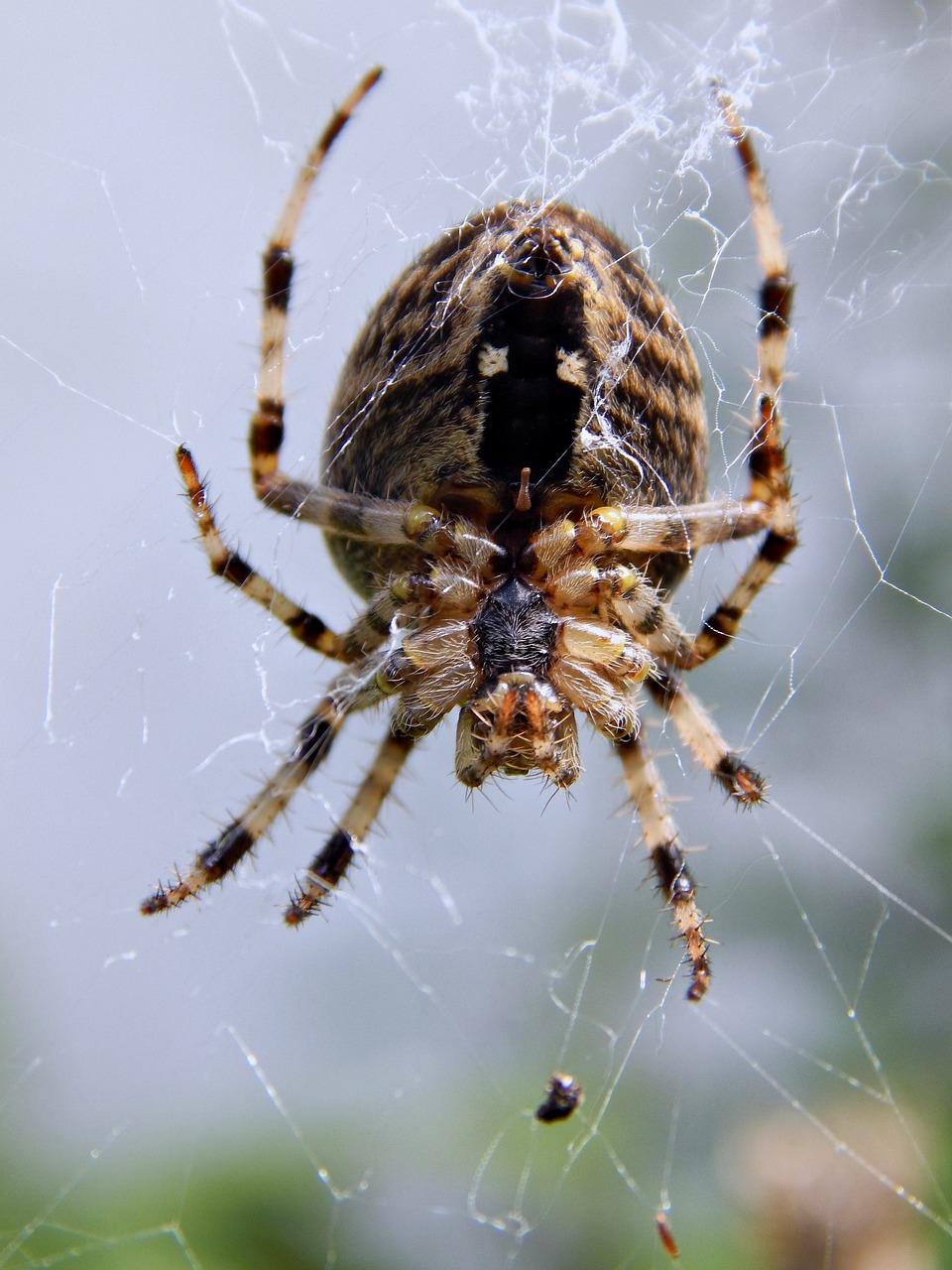 пневматическое фото паука крестоносца красноярске всех