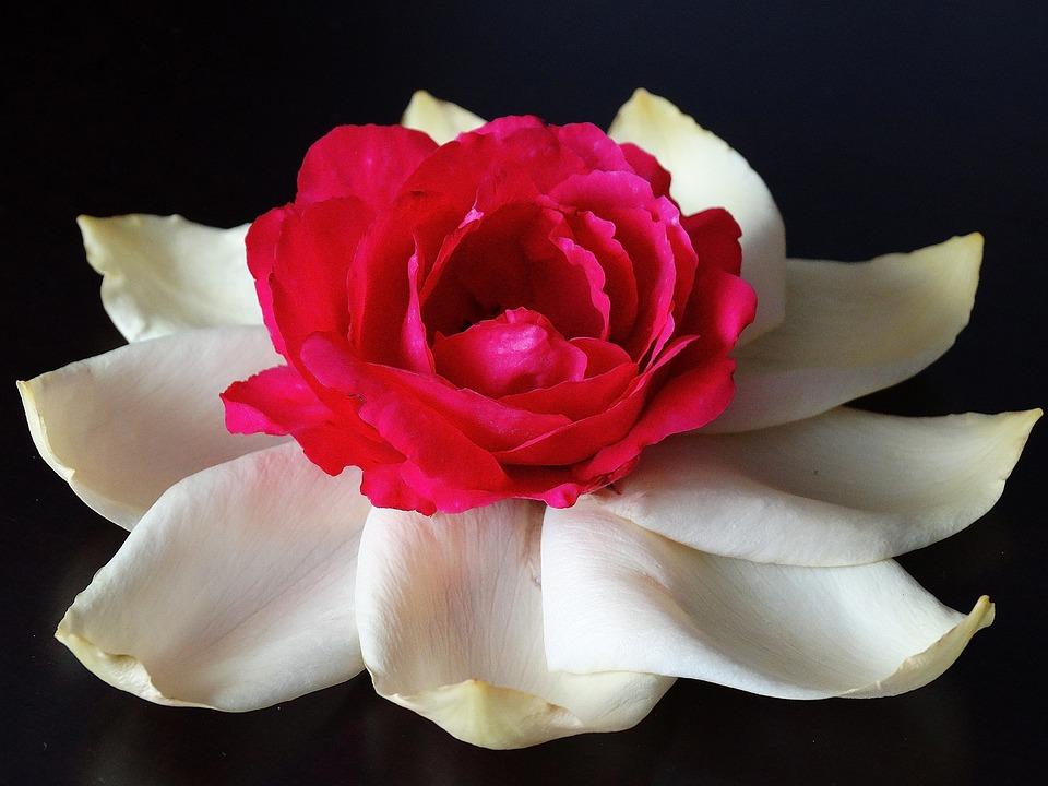 Download 820 Koleksi Gambar Bunga Cantik Bergerak Paling Cantik