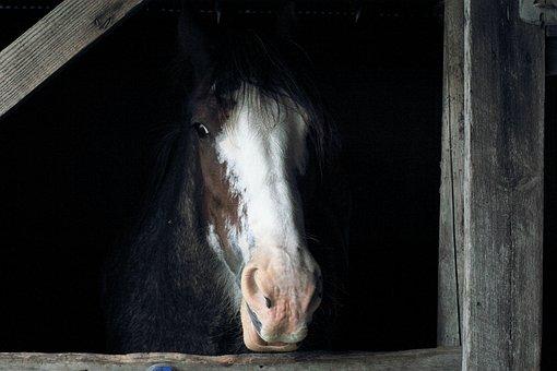 Pferd, Stand, Scheune, Tier, Bauernhof